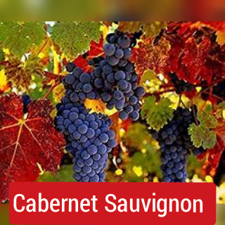 Grape Varietal: Cabernet Sauvignon